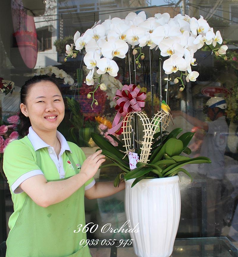 Shop hoa lan hồ điệp giá rẻ 23