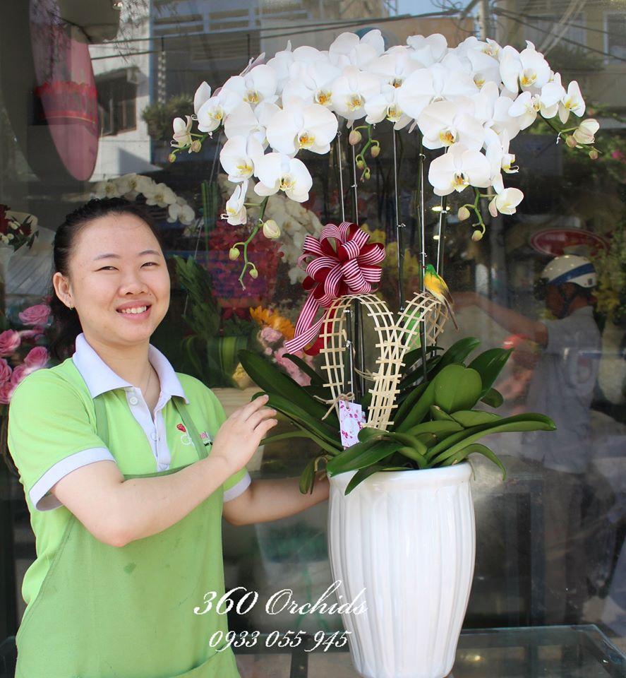Shop hoa lan hồ điệp giá rẻ 5
