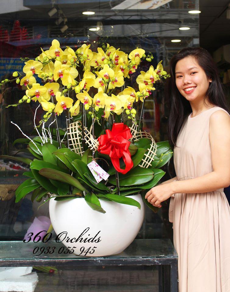 Shop hoa lan hồ điệp giá rẻ 6