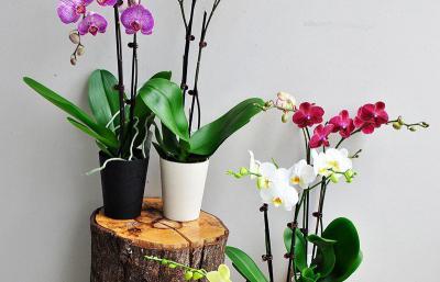 Cách chăm sóc hoa lan bạn đã thực sự biết?