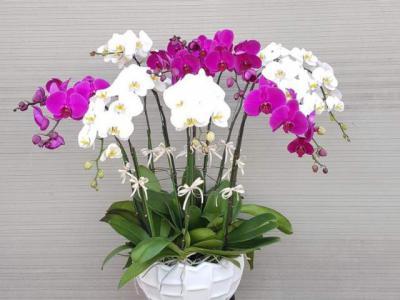 Hoa lan đẹp và mang ý nghĩa sâu sắc