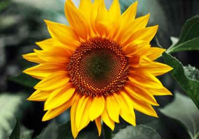 Top hình ảnh hoa đẹp khiến triệu trái tim phụ nữ tan chảy